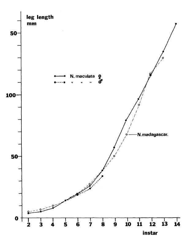 Np. pilipes (graph).jpg